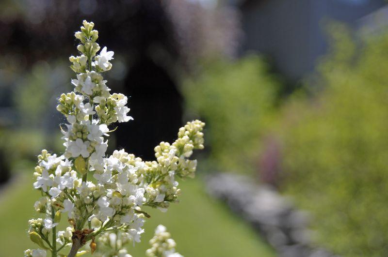 Springtime Walk (4)