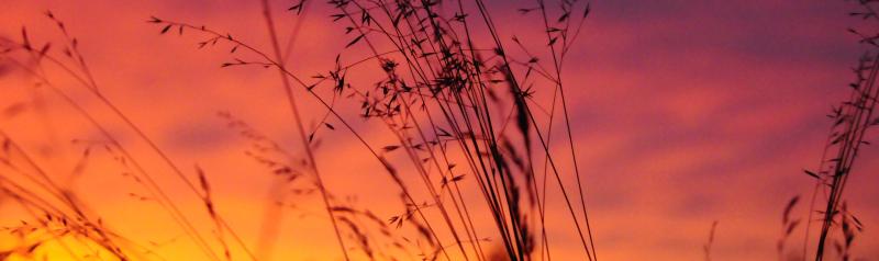 July 24  2017 Sunset (7) crop