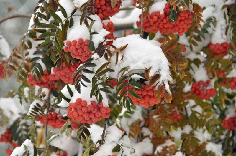 November Snow Day (65)