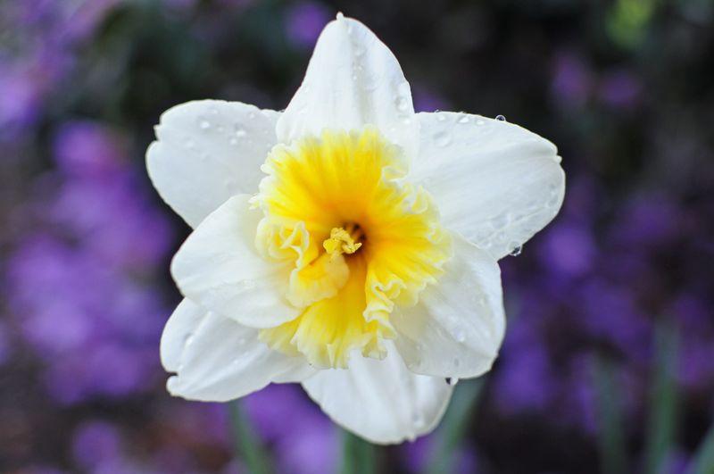 April 1 Flowers  (4)